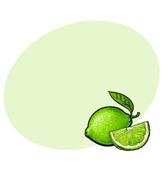 whole and quarter of unpeeled green lime sketch vector image