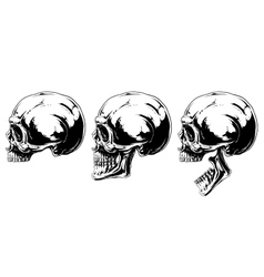 Graphic black and white human skull projection set vector image