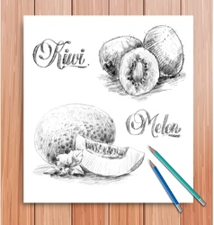 realistic sketch of fruits kiwi and melon vector image