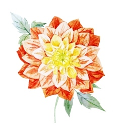 Watercolor dahlia flowers vector