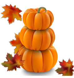 pumpkin realistic on white vector image
