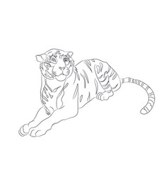 a tiger that lies drawing by vector image
