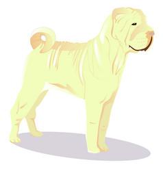 chinese shar pei white dog vector image