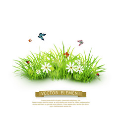 Element for design green grass isolated vector