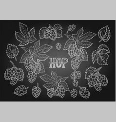 Graphic hops collection vector