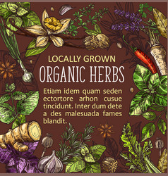 Spices and herbs sketches vegetable seasonings vector