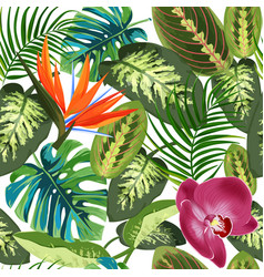 tropical leaves palm trees dieffenbachia and vector image