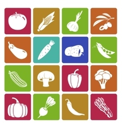 Colorful vegetable icon set vector image