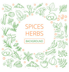 Hand drawn herbs and spices healthy natural vector