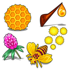 healthy honey set five items isolated vector image