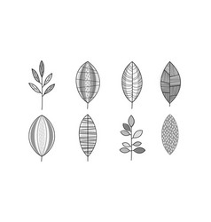set of monochrome hand drawn leaves vector image