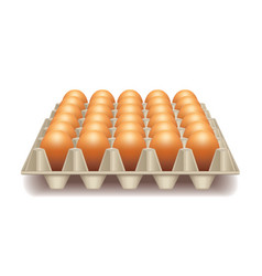Tray with eggs isolated on white vector image