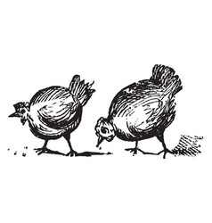 Two chickens vintage vector