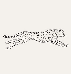 runing leopard hand drawn vector image vector image