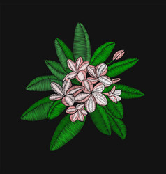 Flowers embroidery frangipani and leaves plumeria vector