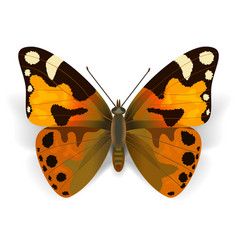 Orange butterfly vector
