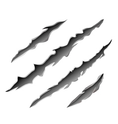 Claws scratch mark vector image