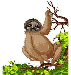 Cute sloth on branch vector