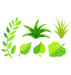 Different types of green leaves in watercolor vector