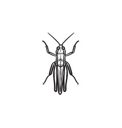 Grasshopper hand drawn sketch icon vector