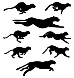 Wildcats set vector