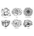 set flower and leaf hand drawn botanical vector image vector image