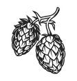 vintage hop cones concept vector image