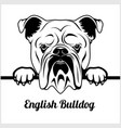 english bulldog - peeking dogs - - breed face head vector image