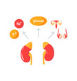 functions of adrenal glands diagram