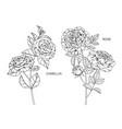 set camellia rose flower and leaf hand drawn vector image vector image