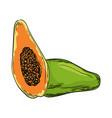 watercolor eco frut line painted papaya colored vector image