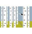 white birch grove vector image