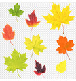 autumn leaves set isolated transparent background vector image