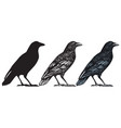 hand-drawn black birds raven crow rook jackdaw vector image