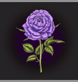 hand drawn violet rose flower isolated on black vector image