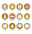 Set of flat different nuts vector image vector image