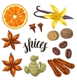 Various stylized spices set of anise vector image