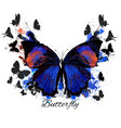detailed butterfly in detailed style vector image vector image