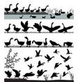 flock gooses vector image vector image