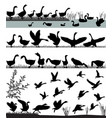 flock of gooses vector image vector image