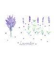 lavender flowers bouquet lettering purple green vector image