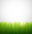 natural background of grass on white background vector image vector image