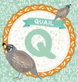 ABC animals Q is quail Childrens english alphabet vector image