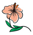 a pale pink hibiscus flower with orange pestle vector image