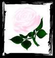 abstract white rose vector image