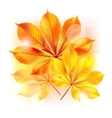Autumn background with yellow leaves vector image vector image