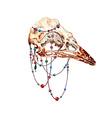 Bird Skull2 vector image vector image