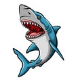 cartoon angry shark mascot on white background vector image vector image