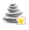spa stone vector image
