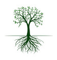 tree with leaves and roots on white background vector image vector image
